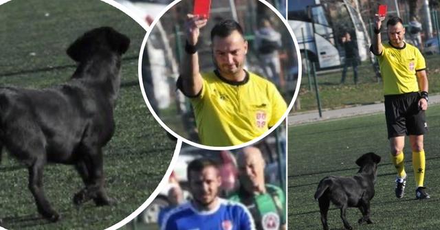 Serbischer Hund sieht Rot für viermaliges Eindringen auf das Spielfeld, weigert sich zu gehen, Schiedsrichter bricht Spiel ab